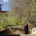 チベット旅行記:2日目 神の地ラサへ。高山病に効くのは激辛スープでした。